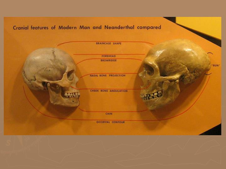 Neanderthal and emergence of mind what it means to be human