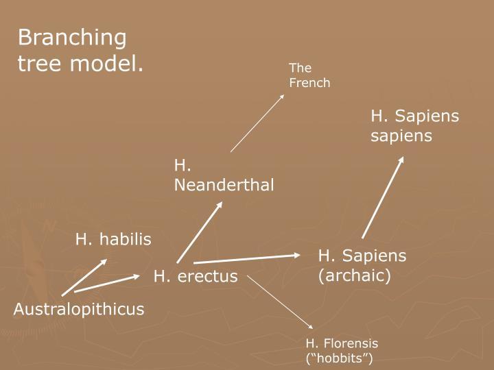 Branching tree model.