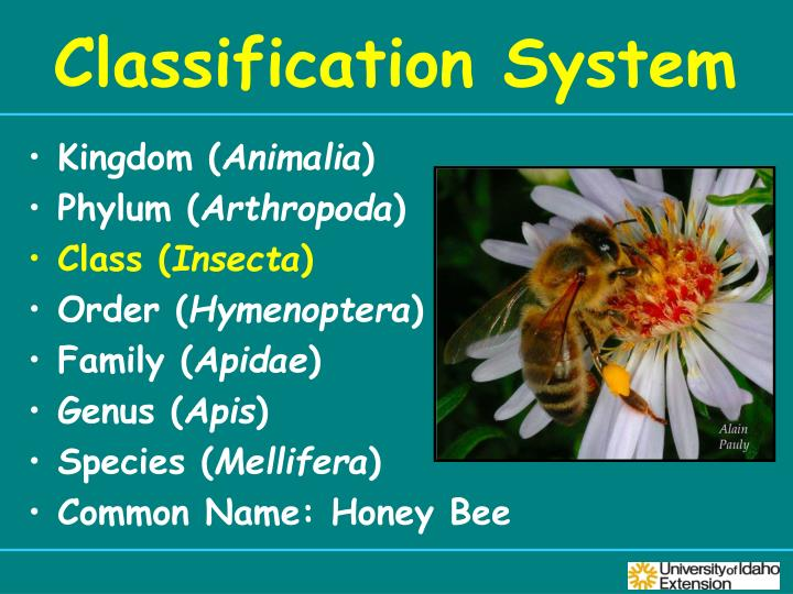PPT - Insect ID and Management PowerPoint Presentation ...