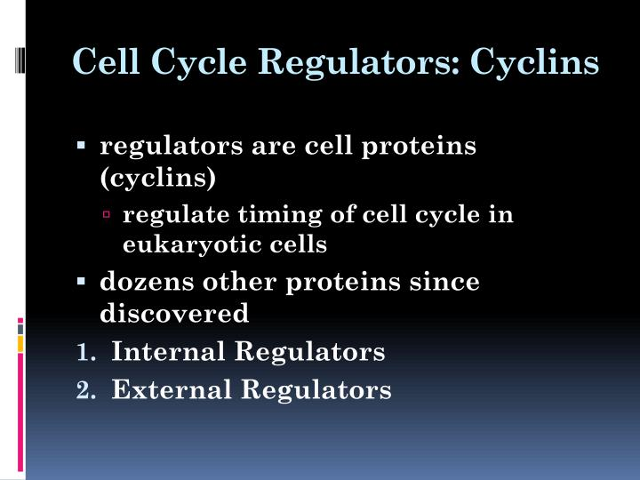 Cell Cycle Regulators: