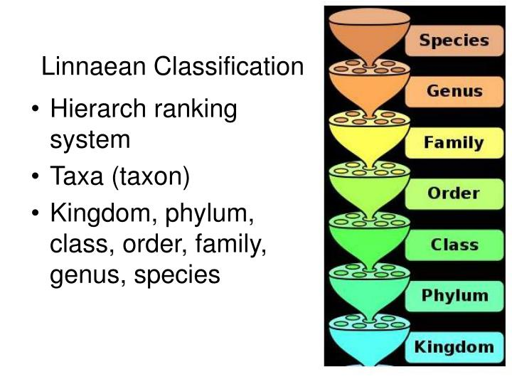 Linnaean Classification