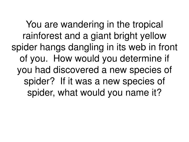 You are wandering in the tropical rainforest and a giant bright yellow spider hangs dangling in its ...