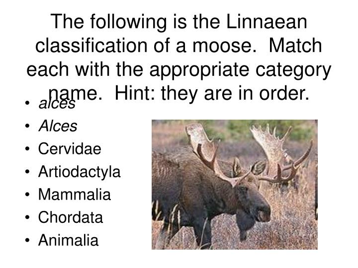 The following is the Linnaean classification of a moose.  Match each with the appropriate category name.  Hint: they are in order.