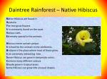daintree rainforest native hibiscus