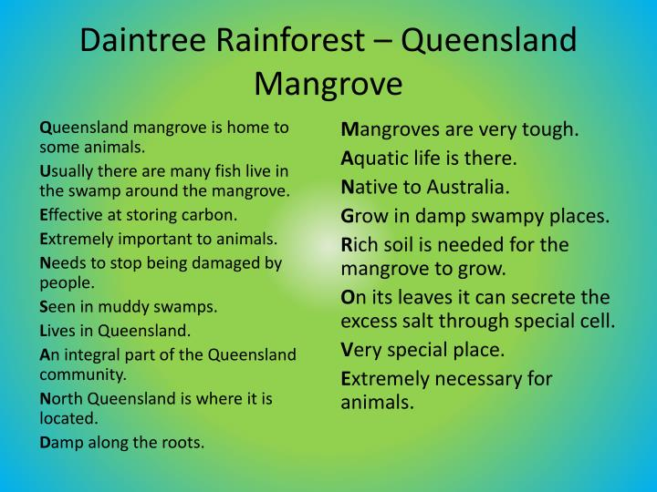 Daintree Rainforest – Queensland Mangrove