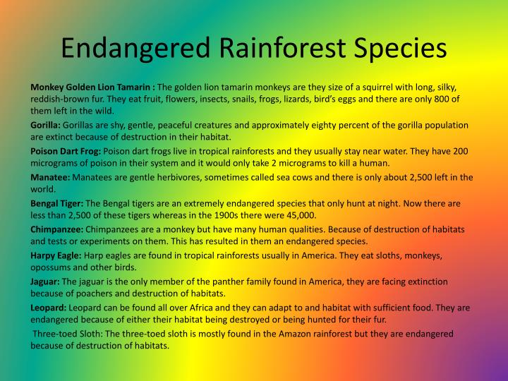 Endangered Rainforest Species