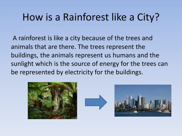 How is a Rainforest like a City?