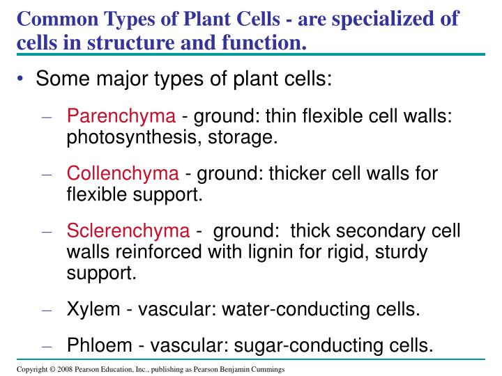 Common Types of Plant Cells - are