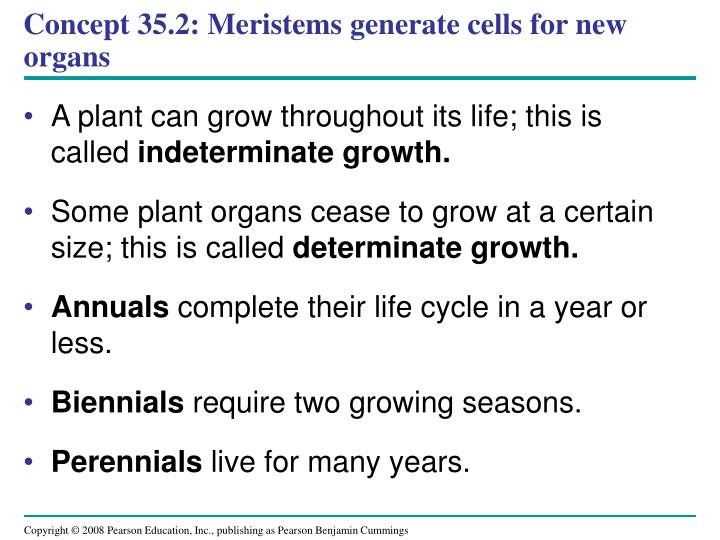 Concept 35.2: Meristems generate cells for new organs