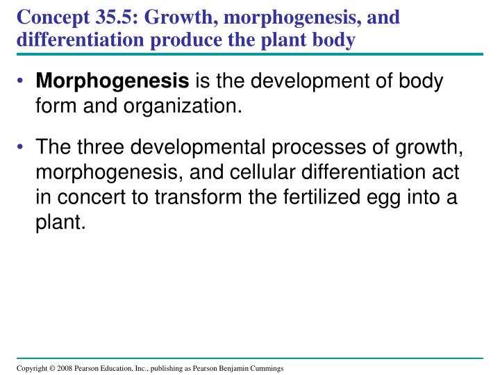Concept 35.5: Growth, morphogenesis, and differentiation produce the plant body