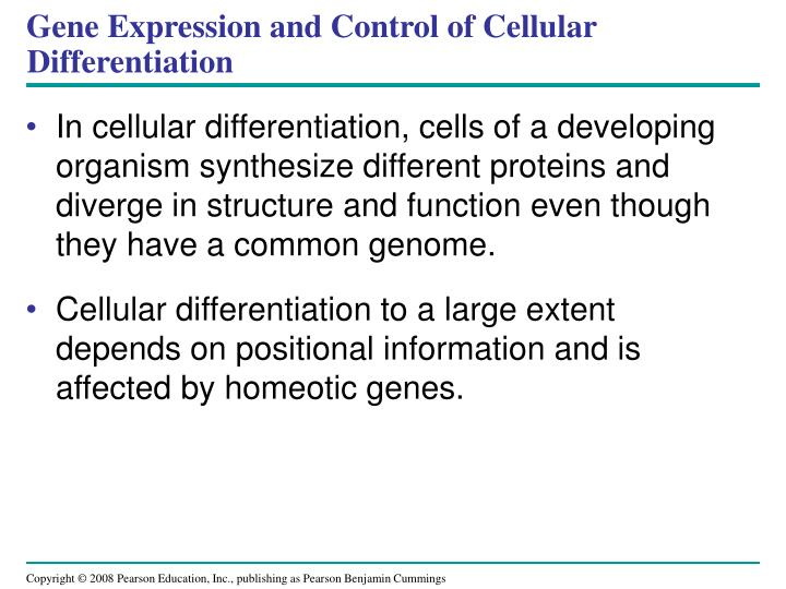 Gene Expression and Control of Cellular Differentiation