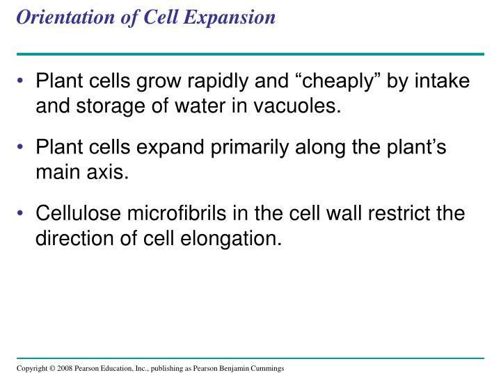 Orientation of Cell Expansion
