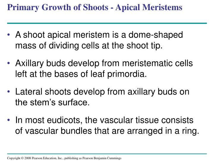 Primary Growth of Shoots - Apical Meristems