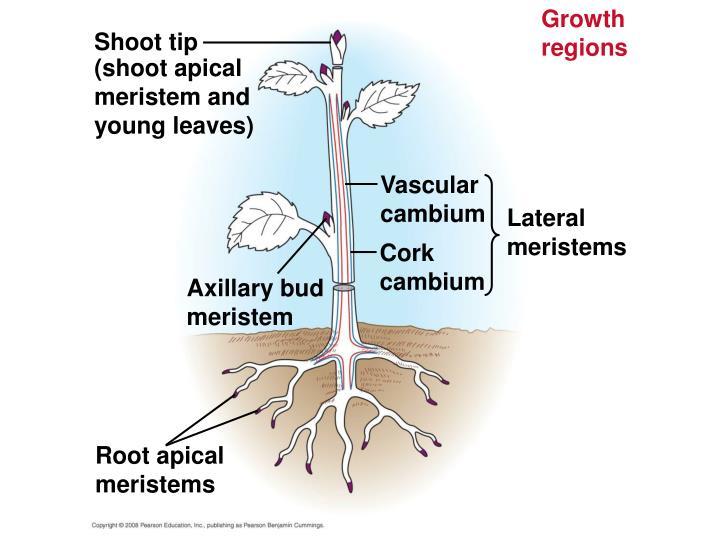 Growth regions