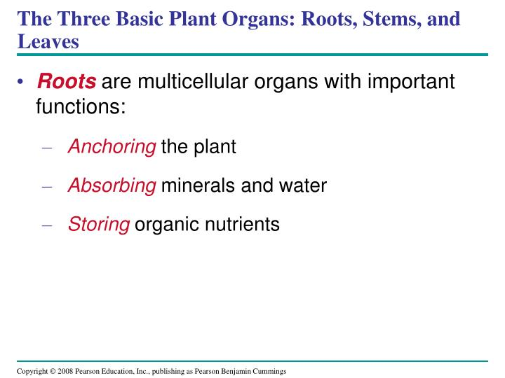 The Three Basic Plant Organs: Roots, Stems, and Leaves