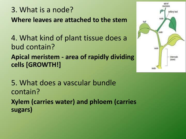 3. What is a node?