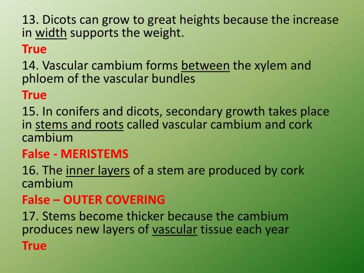 13. Dicots can grow to great heights because the increase in
