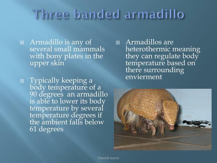 Three banded armadillo