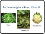 are these veggies alike or different
