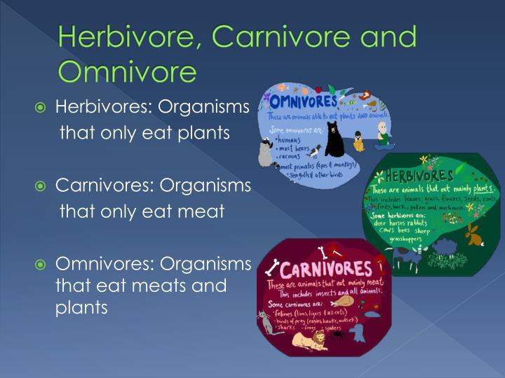 Herbivore, Carnivore and Omnivore