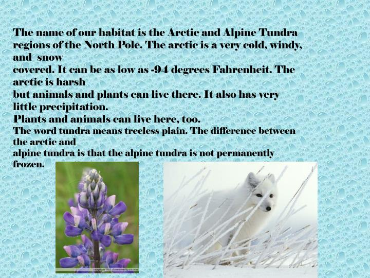 The name of our habitat is the Arctic and Alpine Tundra
