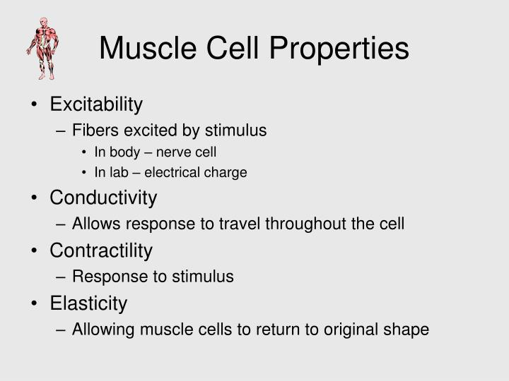 Muscle Cell Properties