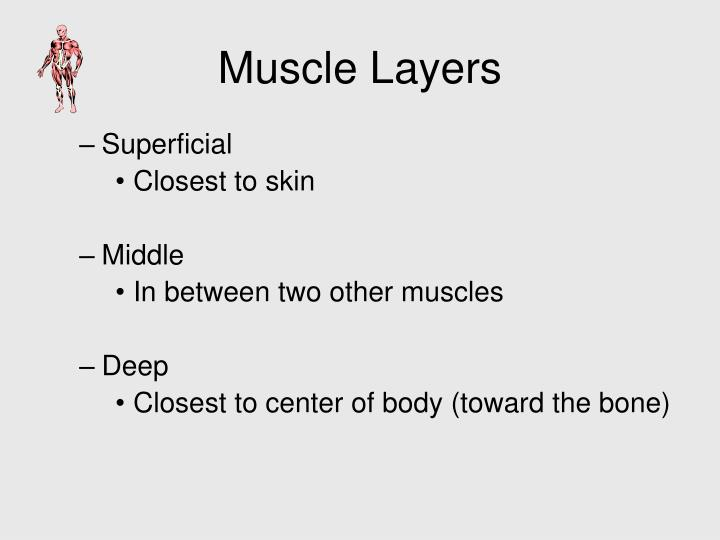 Muscle Layers