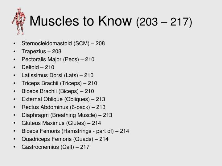 Muscles to Know