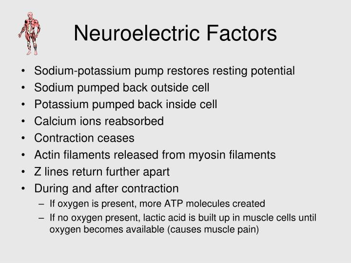 Neuroelectric Factors