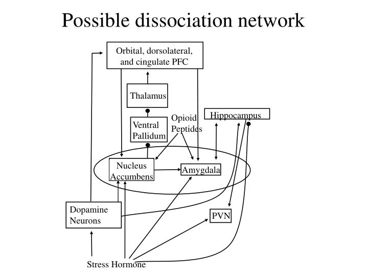 Possible dissociation network