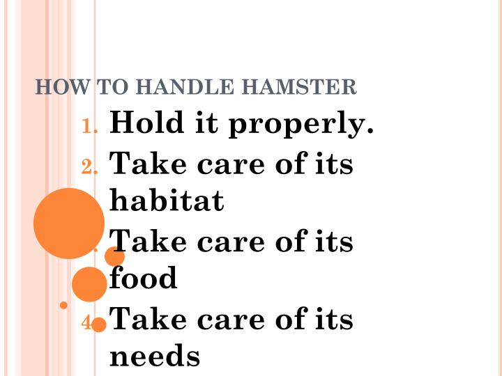 How to handle hamster