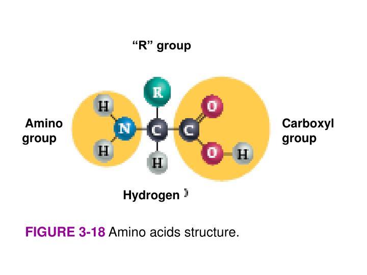 """""""R"""" group"""