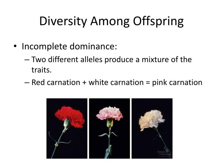 Diversity Among Offspring