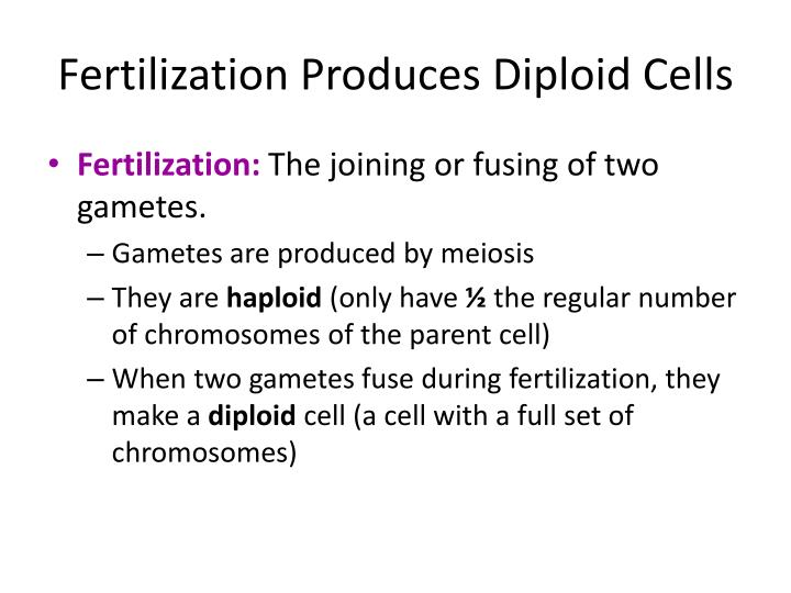 Fertilization produces diploid cells