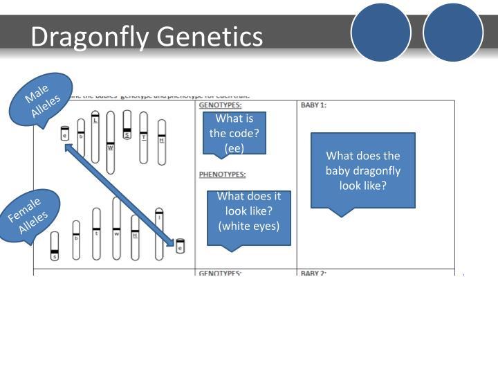 Dragonfly Genetics