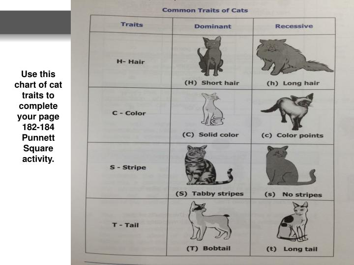 Use this chart of cat traits to complete your page 182-184