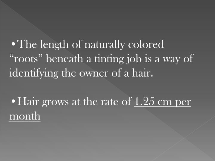 "The length of naturally colored ""roots"" beneath a tinting job is a way of identifying the owner of a hair."
