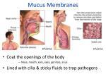 mucus membranes