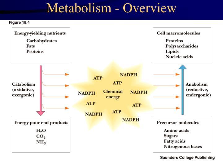 Metabolism - Overview