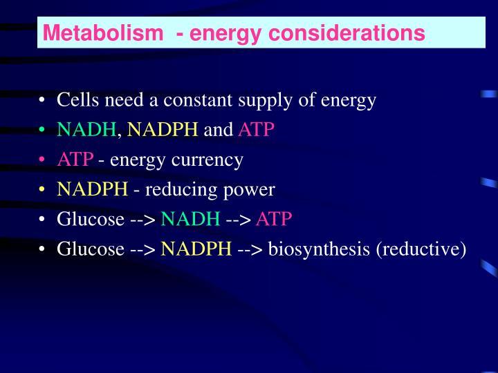 Metabolism  - energy considerations