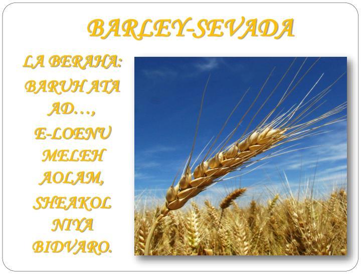 BARLEY-SEVADA
