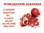 pomegranate agranada