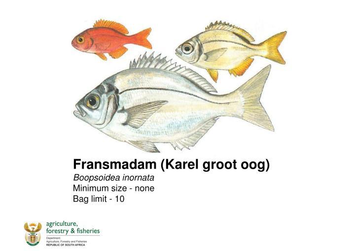 Fransmadam