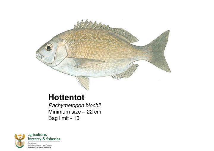 Hottentot