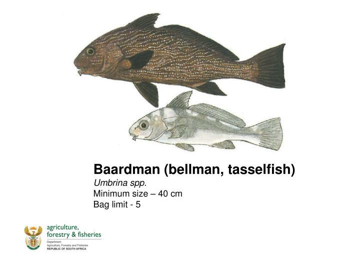 Baardman