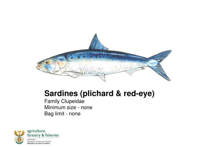 Sardines (