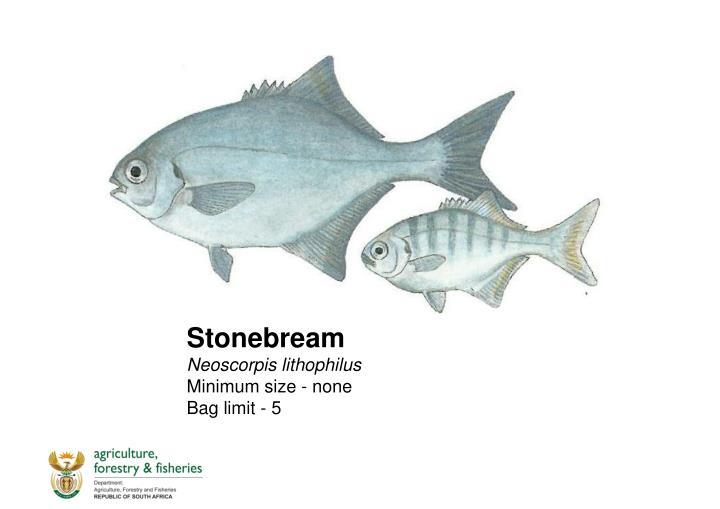 Stonebream