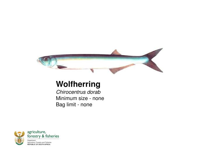 Wolfherring