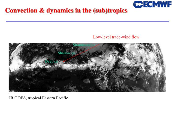 Convection & dynamics in the (sub)tropics