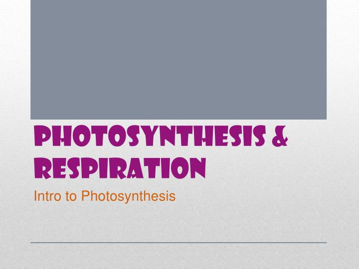 photosynthesis ppt presentation